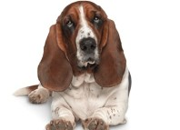 Perro imagen de Rastreator